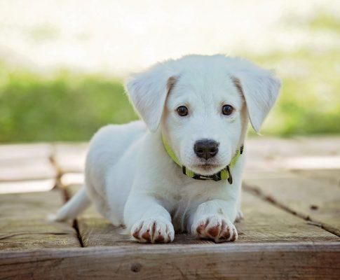 Com que idade devo começar a treinar meu cachorro?